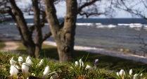 Strandpromenaden våren 2015. Foto: Linda Dahlström