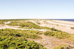 Langhammar. Foto: Linda Dahlström